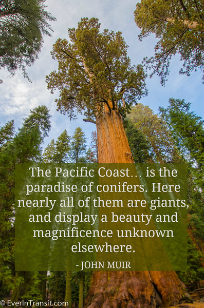 John Muir on the Pacific Coast forests | Favorite John Muir Quotes