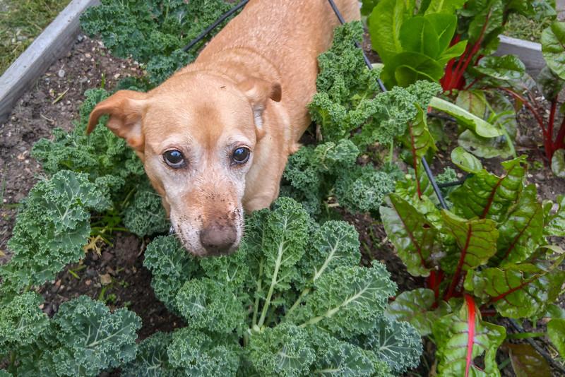 Posey in the garden