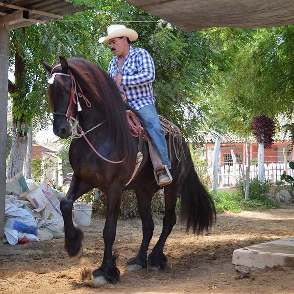 Dancing horses in Puerto de Canoas, Sinaloa, Mexico