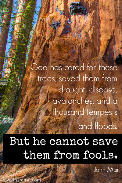 On protecting our forests & conservation | John Muir quotes