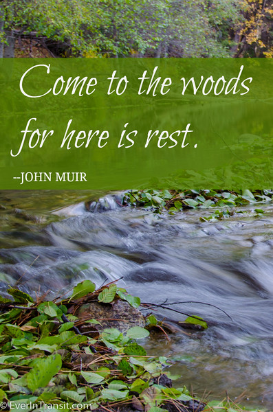"""Come to the woods for here is rest."" John Muir Quote"